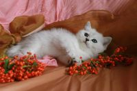 superbes chatons recherche famille
