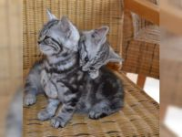 je donne chatons