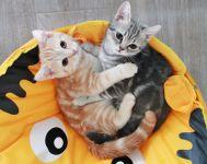 Jolis bébés chats cherchent foyer