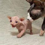 les chatons sont agés de 04 mois